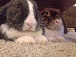 Unsere Beiden Rabauken für die der Kaninchenstall selber gebaut wird