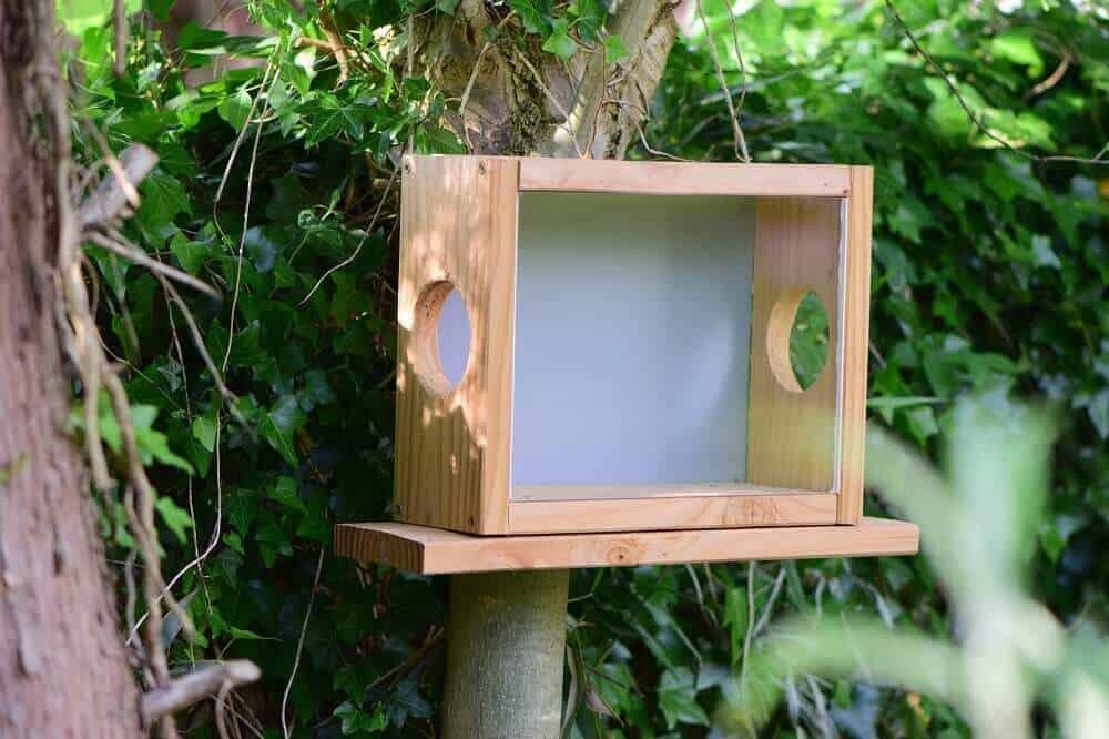 eichhörnchen futterkasten selber gebaut und am baum befestigt
