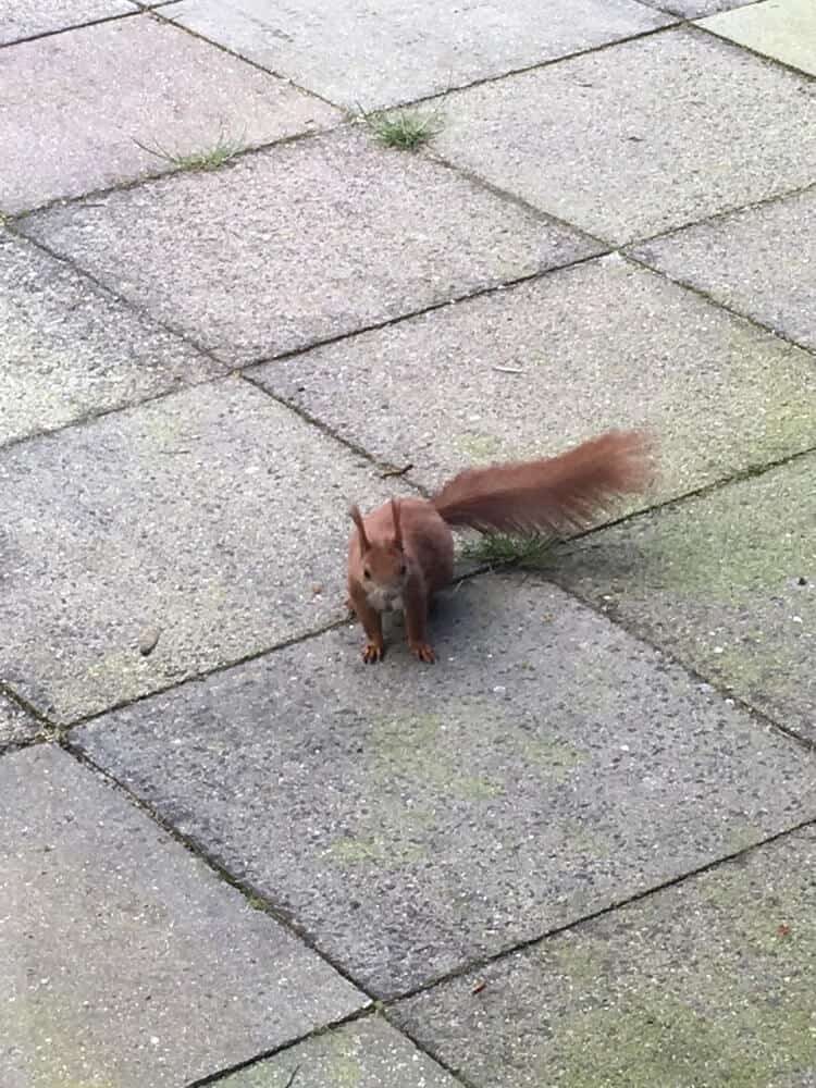 eichhörnchen auf der terrasse