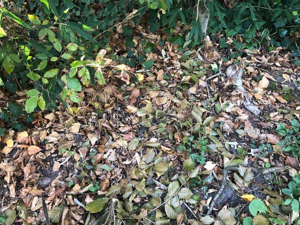 Laub in einer Ecke des Gartens für die Igel im Winter sammeln