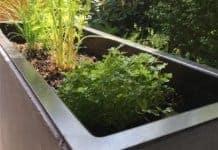 Unsere Pflanzkübel - Kräuter in der Pflanztröge auf der Terrasse pflanzen