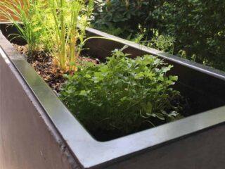 unsere pflanzkübel kräuter in der pflanztröge auf der terrasse pflanzen