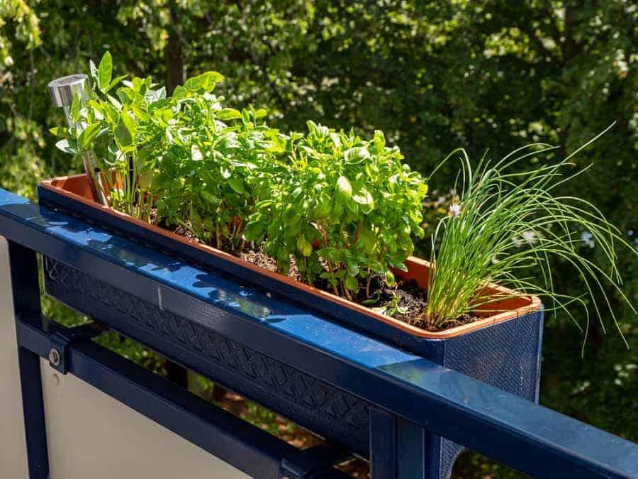 auch mit wenig platz kann man ein tolles kräuterbeet anlegen zum beispiel im klassischen balkonkasten oder in kleinen pflanzkästen
