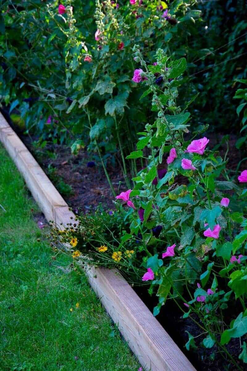 Unsere Blumen und Stauden sehen super aus im Beet - eingefasst von Gartenschwellen aus Holz