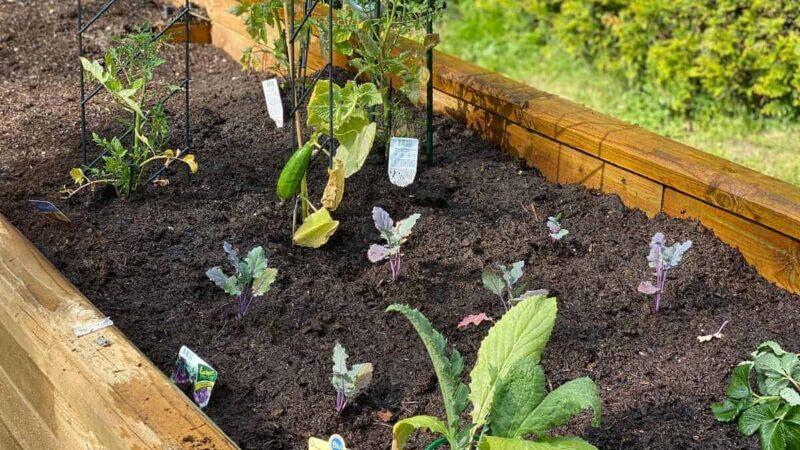 Hochbeet aus Holz - Bausatz errichten, Hochbeet schichten und Beet befüllen, um leckeres Gemüse zu ernten