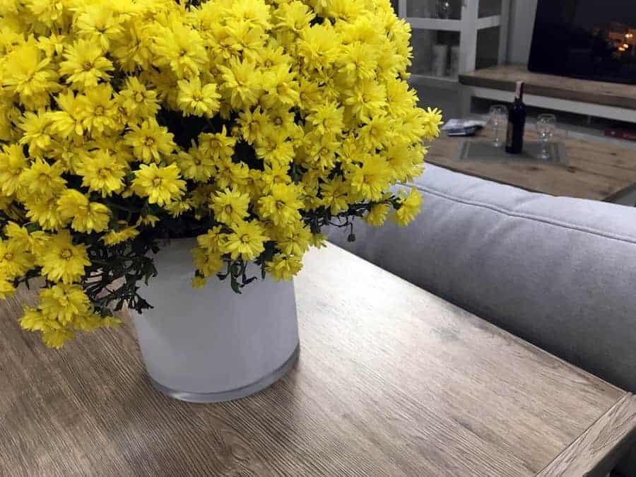raumklima verbessern mit pflanzen chrysanthemen befreien die luft von ammoniak und vielen anderen schadstoffen