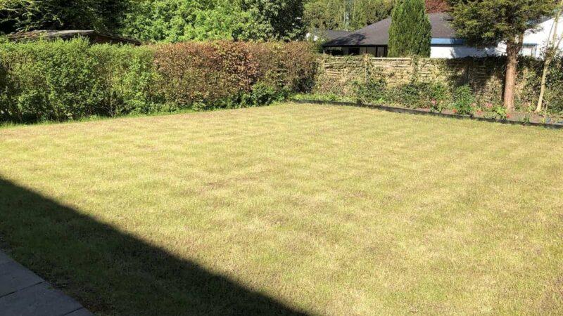 Vertikutierter Rasen sieht nicht immer sehr schön aus, erholt sich aber durch Nachsäen und Düngen meist schnell wieder, um dann sogar besser auszusehen als vorher