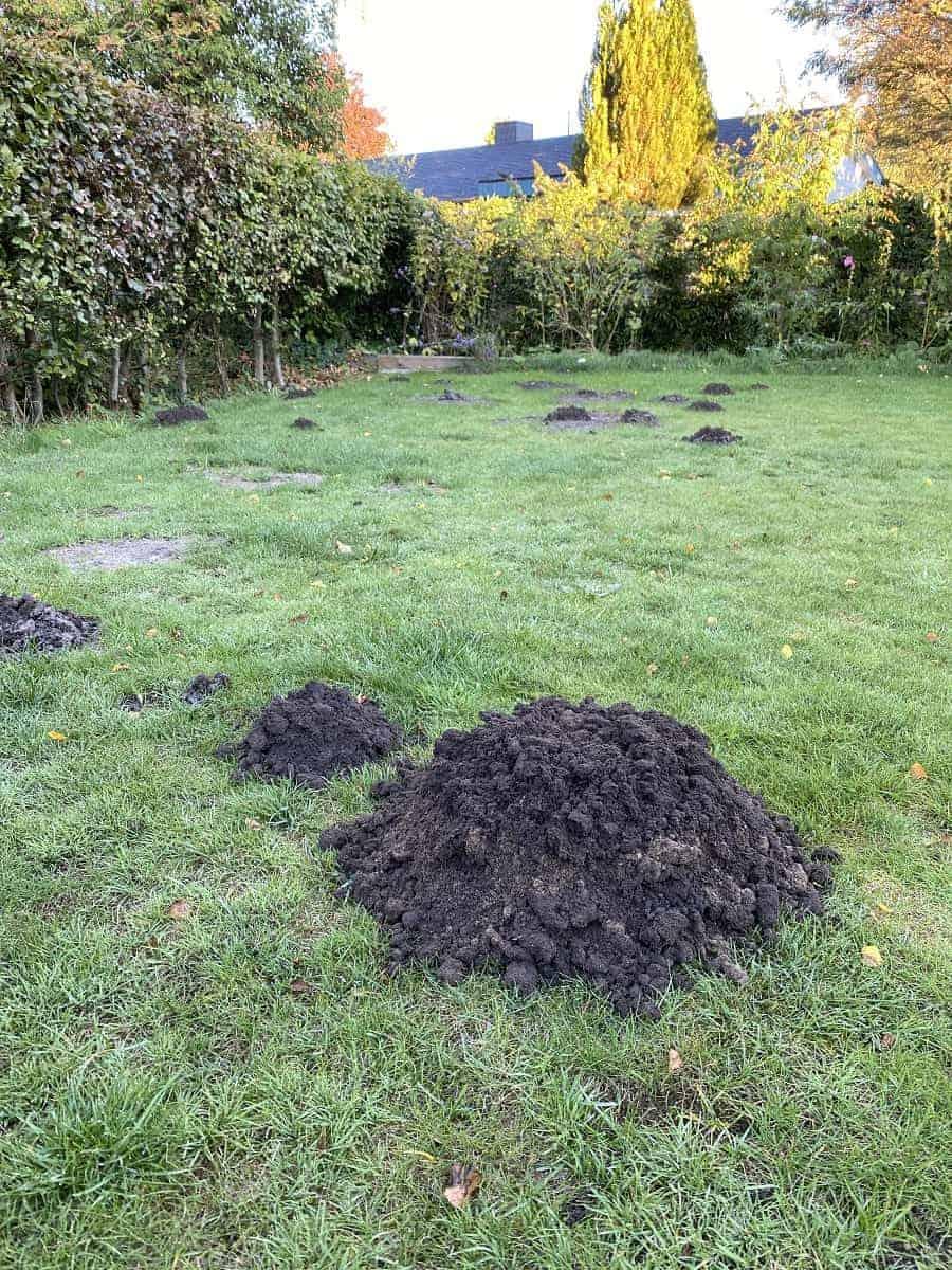Maulwurf bekämpfen - Hier findest Du Tipps und Hausmittel, wie Du deinen Maulwurf im Garten wieder loswirst