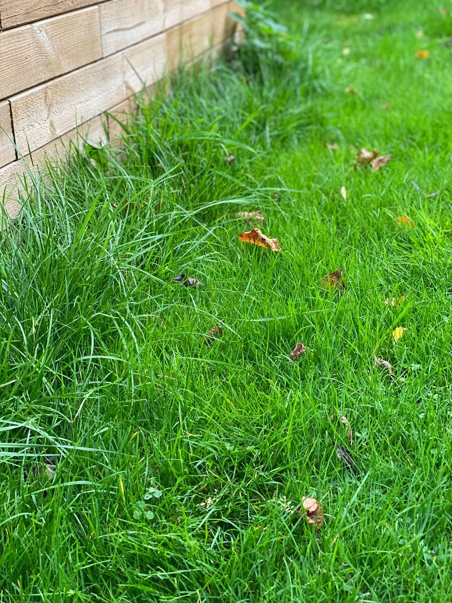 Bei uns bleiben am Hochbeet noch Grashalme stehen, die der Rasenmähroboter nicht erwischt