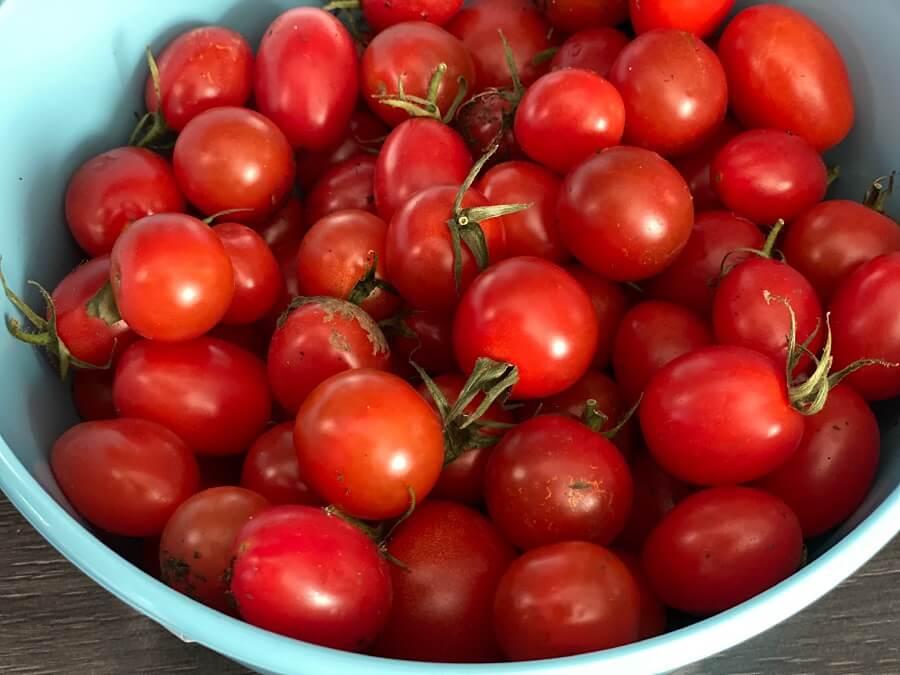 Mit selbstgeernteten Tomaten schmeckt die Tomatensuppe gleich doppelt so gut