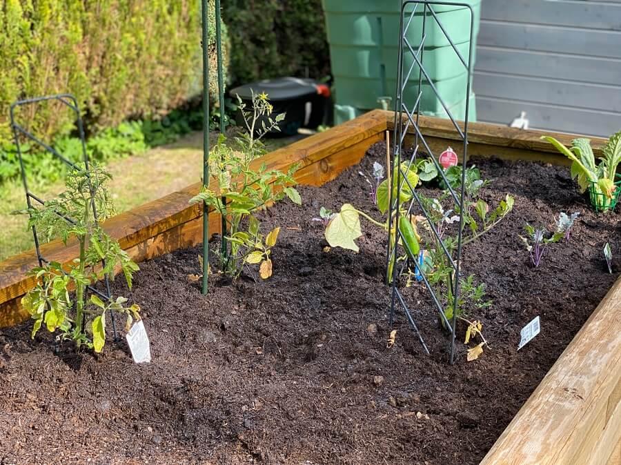 Wir haben Tomaten im Hochbeet angepflanzt - Gemeinsam mit Gurken, Möhren und Kohlrabi