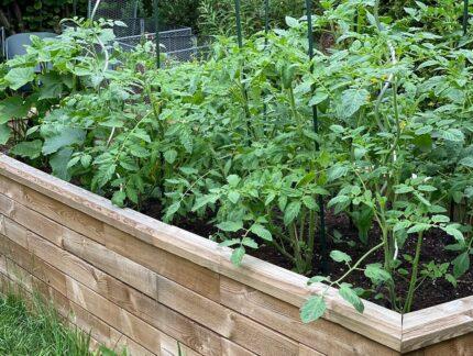 Naschgarten anlegen und gestalten - Ideen, Tipps zum Pflanzplan - Auch für den Balkon geeignet